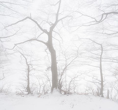 Haunted Trees (Annette Dahl) Tags: fog trees crooked haunted mist winter snow
