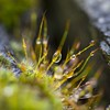 Raindrops in the moss (Martin Bärtges) Tags: nikon macrophotography nature makrofotografie makro macro water waterdrops raindrops rain moos moss
