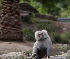 IMGP2932 (nathanmeade_) Tags: pentaxian animals zoo werribee zoos wildlife