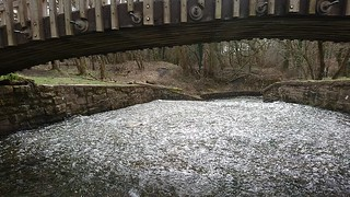 Cannop Ponds Video