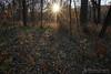 The Apparition (right2roam) Tags: nebraska woods sunset starburst sunburst hiking omaha nealewoods right2roam autumn sun shine