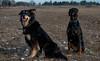 _DSC4444.jpg (bigbamboy) Tags: luna sternchen lunaundsternchen hund dobermann