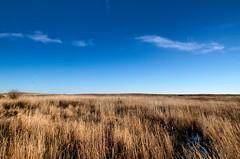 Early Winter Nose Hill Grass (Bracus Triticum) Tags: early winter nose hill grass calgary カルガリー アルバータ州 alberta canada カナダ 12月 december 2017 平成29年 じゅうにがつ 十二月 jūnigatsu 師走 shiwasu priestsrun