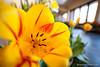 13-watermark (Brian M Hale) Tags: tower hill botanic botanical garden boylston ma mass masssachusetts brian hale brianhalephoto hallway indoors inside flower flowers laowa 15mm f4 macro closeup close up