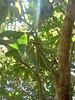 DSC02511 (classroomcamera) Tags: closeup campus garden gardens tree trees plant plants leaf leaves leafy trunk trunks third thirds rule light lights sunlight sunshine backlit backlighting