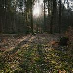 Waldszene am Abend thumbnail