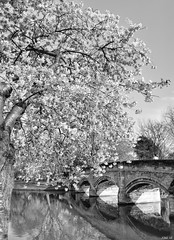 Spring in monochrome! (Nina_Ali) Tags: reflection leicester 7dwf bridge abbeypark monochrome blackandwhite nature landscape