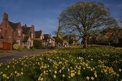 Astbury in Spring (PentlandPirate of the North) Tags: astbury cheshire flowers church spire oak daffodils