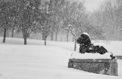 Le lion (Paul Leb) Tags: hiver montréal québec canada lion invierno winter neige nieve snow noiretblanc nb blackandwhite