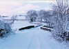 snow (Duncan the road rebel) Tags: snow snowscape cold tree bridge outdoor outside landscape