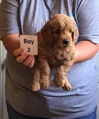 Ella Boy 2 4-21