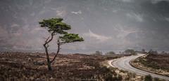 A Road to Somewhere (Scott Robertson (Roksoff)) Tags: bendamph benalligin kinlochewe gairloch liathach slioch lochclair westerross torridon lochmaree beinneighenationalnaturereserve leathadbuidhe glenbianasdail sgurrdubh beinnamhuinidh sgurrbeinnamhuinidh upperlochtorridon beinneighe rainbow atmosphere mood scotland winter snow ice river water sky landscape outdoors nikond800 nikond810 1635mmf4 70200mmf28 leefilters