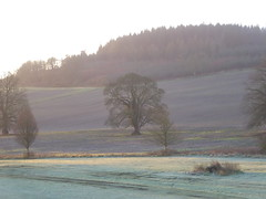 Mist and frost (seikinsou) Tags: ireland westmeath winter dawn sunlight garden sunrise mist frost grass field meadow hillside tree