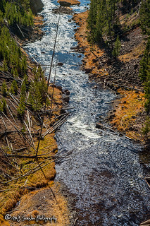 Gibbon River | Yellowstone National Park | Wyoming