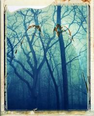(er_code_blue) Tags: polaroidweek expired packfilm analog instant film 108 190 polaroid