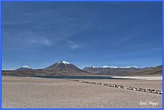 Laguna Miscanti, Chile (Luís Biggi) Tags: lagunamiscanti chile desert deserto vulcão volcano vulcán atacama andes nikon nikond7500 nikonafs16~35mmf4gedvr landscape
