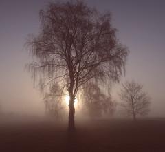 Morning mood (Ingrid0804) Tags: morning morningmood atmospheric evocative mist fog silhuettes trees