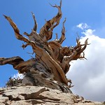 Timelapse Clouds Over The Bristlecone Pines. thumbnail