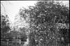 blossoms, vines, trellis, fence, walkway, backlit, Durham, North Carolina, Olympus XA4, Kodak TMAX 400, Ilford Ilfosol 3 developer, mid April 2018 (steve aimone) Tags: trellis vines floralforms blossoms walkway fence backlit durham northcarolina olympusxa4 kodaktmax400 ilfordilfosol3developer 35mm 35mmfilm landscape blackandwhite monochrome monochromatic