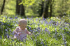 Ava in the bluebells (RyanMorris_Photography) Tags: canon80d canon canonphotography canonphotographer canon100mmmacro flower flowerphotography floral bluebells bluebell blue woods woodland portrait photography baby babyphotography babies babygirl posing picking nature naturephotography