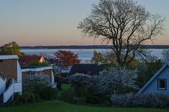 Another beautiful spring evening in Hittarp (frankmh) Tags: landscape evening spring hittarp helsingborg skåne sweden öresund denmark