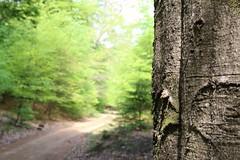 Promenade en forêt (RW-V) Tags: canoneos70d canonefs35mmf28macroisstm fôret wald forest kroondomeinhetloo hiking arbres trees baumen bomen natur nature natuur sooc 100faves 150faves 175faves 200faves 225faves 250faves 275faves 2500views