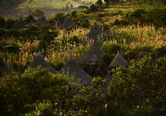 Dareshe Village (Rod Waddington) Tags: africa african afrika afrique ethiopia ethiopian etiopia omo omovalley dareshe tribe tribal traditional culture cultural ethnic ethnicity village outdoor