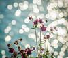 Orchide Sparkles. (Omygodtom) Tags: orchid sparkle river sunshine nikon70300mmvrlens d7100 dof bokeh round smugmug flickr flower wildflower