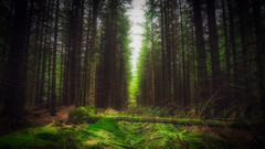 Time to Focus (Augmented Reality Images (Getty Contributor)) Tags: woodland trees moss perthshire scotland longexposure forest nisifilters spring landscape water canon pines pathofcondie nature unitedkingdom gb