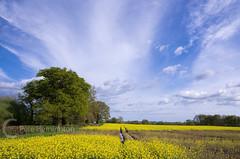 Fields near Broadclyst