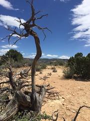 (mr. failbetter) Tags: landscape tree desert chimneyrocktrail ghostranch newmexico