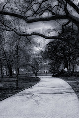 Capitol and Trees (PAJ880) Tags: us capitol dome trees path congress government mono bw