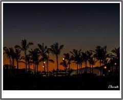 Playa Blanca (ITURRATE) Tags: palmeras atardecer playa blanca lanzarote canarias