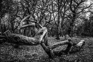 does it come alive? fine art forest details in black & white, Drum Castle, Aberdeenshire, Scotland