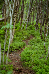 Hidden path (Stierne) Tags: forest wood tree grass path sony a7