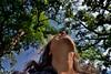 The Trees and I...With a Little Bit of Sunshine! (thor_mark ) Tags: nikond800e imagecapturewithcamranger camranger enchantedrockstatenaturalarea lookingup lookingne azimuth26 blueskieswithclouds sunny landscape nature capturenx2edited colorefexpro texasstatepark trees hillcountry northamericaplains greatplains southerngreatplains edwardsplateau ideasigotfromothers lookingupatsky lookingupatskythroughtrees lookingupatskythrutrees lookinguptosky me selfphoto project365 portfolio tx unitedstates