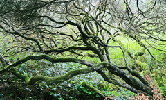 In The Rain Forest (Team Hymas) Tags: green forest washington rain limbs chaos