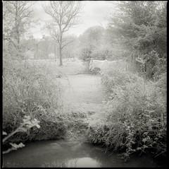 Horse garden (kenichiro_jpn) Tags: 400tx hassel hasselplanarcf80mm film ロンドン horse whitehorse newforest blackandwhite monochorome bnw animal filmcamera hasselblad