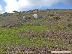 2018-05-12 RosewallHill.005 (Rock On Tom) Tags: phillack hayle rosewallhill stives walk beach coastpath
