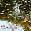 水様=Appearance of water-161/The circles in the fluctuation of nature (kouichi_zen) Tags: leaves water reflection tree nature black green circle
