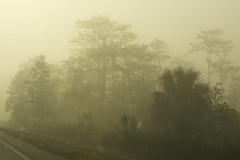 foggy ride (ucumari photography) Tags: ucumariphotography bigcypressnationalpreserve florida fl march 2018