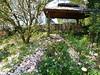 2018 Germany // Unser Garten - Our garden // im April // (maerzbecher-Deutschland zu Fuss) Tags: garten natur deutschland germany maerzbecher garden unsergarten 2018 april magnolie