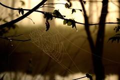 The tangled web (smcnally24601) Tags: mist river mole surrey britain british england english morning spring betchworth