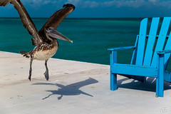 Hey ! It is my chair !! (poupette1957) Tags: art atmosphère beach canon city curious colors couleur deco embarcadère grandangle humour imagesingulières sky life landscape nature photographie animals guatemala rue sea street shadows town travel urban ville voyage view