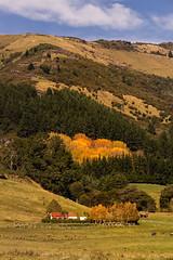 Golden colour (malcolmgrant2) Tags: ruralscene autumncolours okitivalley landscape fe70200 sonya7