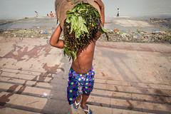 #05 (koushiksinharoy1) Tags: streetphotography morning india kolkata juxta juxtaposition water trail man boy people shirtless carry brown ghatlife