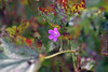 DSC_4007 (Oleg1961) Tags: tokina atx pro 100mm f28 d macro autumn flowers insects dew grass