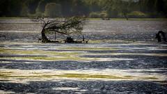 *** (pszcz9) Tags: polska poland przyroda nature natura parknarodowy nationalpark wartamouthnationalpark drzewo tree beautifulearth woda water mokradła wetlands sunset sony a77 pejzaż landscape