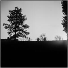 Last Sun (Koprek) Tags: yashicamat124g fomapan 100 film 6x6 april 2018 medium streetphotography