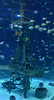 Wonders of Wildlfie National Museum and Aquarium (Adventurer Dustin Holmes) Tags: 2018 wondersofwildlife aquarium saltwateraquarium fish shipwreckroom mast shipsmast crowsnest
